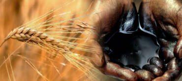 Il prezzo del grano supera quello del petrolio